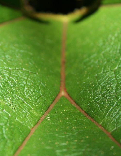 Leaf Trees 1a